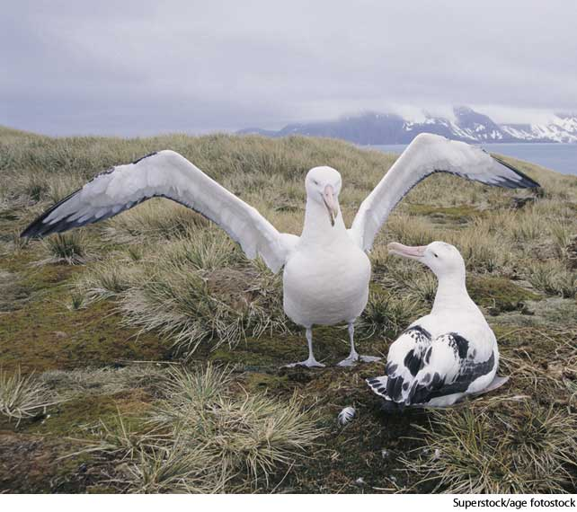 American Heritage Dictionary Entry: albatross